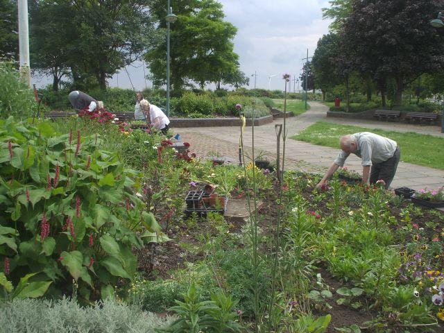 Riverside Gardens Planting June 2014